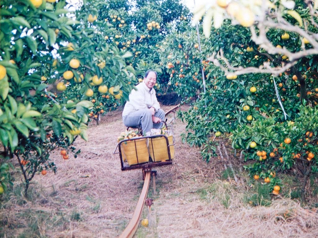 みかん農家をはじめたのは進也さんのお祖父さんに当たる勝(まさる)さん